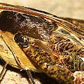 Night Moth by Mareko Marciniak