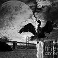 Night Of The Cormorant . Black And White by Wingsdomain Art and Photography