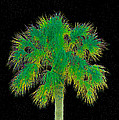 Night Of The Green Palm by David Lee Thompson