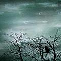 Night Owl by Georgia Fowler