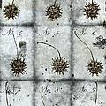 Nine Seed Pods by Carol Leigh