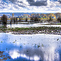 Nisqually Wildlife Refuge P13 by David Patterson
