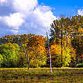 Nisqually Wildlife Refuge P22 by David Patterson