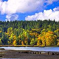 Nisqually Wildlife Refuge P24 by David Patterson