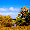 Nisqually Wildlife Refuge P25 by David Patterson