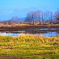 Nisqually Wildlife Refuge P5 by David Patterson