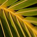 Niu - Cocos Nucifera - Hawaiian Coconut Palm Frond by Sharon Mau
