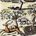 North America: Fauna by Granger