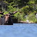 North American Hippo II by Bruce J Robinson