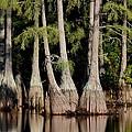 North Carolina - Lake by Travis Truelove