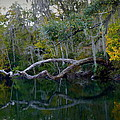 North Florida River Reflections by Carla Parris