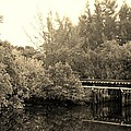 North Fork River In Sepia by Rob Hans