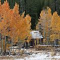 Northstar Aspens by Tony and Kristi Middleton