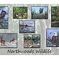 Northwoods Wildlife by Sharon Molinaro