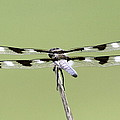 Dragonfly - Not Wilbur's And Orville's Idea Was It by Travis Truelove