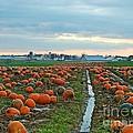 November Pumpkins by Craig Leaper