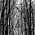 November Wood by Valentino Visentini