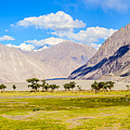 Nubra Valley Ladakh by Puneet Vikram Singh, Nature and Concept photographer,