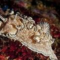 Nudibranch by Louise Murray