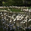 Number Of Flamingoes Inside The Jurong Bird Park In Singapore by Ashish Agarwal