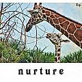 Nurture by Traci Cottingham