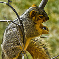 Nuts And Seeds Make A Great Lunch by LeeAnn McLaneGoetz McLaneGoetzStudioLLCcom