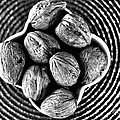 Nuts by Ghassan Ayan