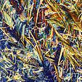 Nylon by Michael W. Davidson