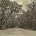 Oak Alley 3 Antique Sepia by Steve Harrington
