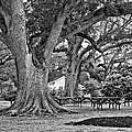 Oak Alley Backyard Monochrome by Steve Harrington