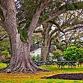Oak Alley Backyard by Steve Harrington