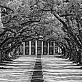 Oak Alley Monochrome by Steve Harrington