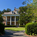 Oak Alley Plantation Side View by Maggy Marsh