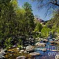Oak Creek by Robert Bales