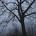 Oak In The Fog by Eva Jo Wu