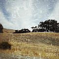 Oak Trees In A California Landscape by Ruby Hummersmith