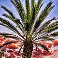 Oasis Palms by Mariola Bitner