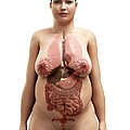 Obese Woman's Organs, Artwork by Sciepro