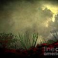 Occotillo And Desert Storm by Arne Hansen