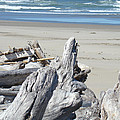Ocean Beach Driftwood Art Prints Coastal Shore by Baslee Troutman