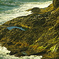 Ocean Pounded Rock  by Jeff Swan