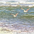 Ocean Seagulls by Cindy Wright