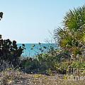 Ocean View by Carol  Bradley