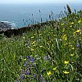 Ocean Wildflowers by Mike Nellums