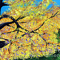 October Fall Foliage by Alys Caviness-Gober