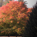 October Sunlight On Tree Tops by Bedford Shore Photography