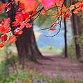October Walk by Mandi Howard