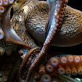 Octopus 1  by Jennifer Bright