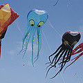 Octopus And Squid-shaped Kites Fly by Stephen Sharnoff