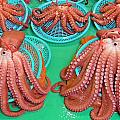 Octopus Attractively Arranged by David Rich